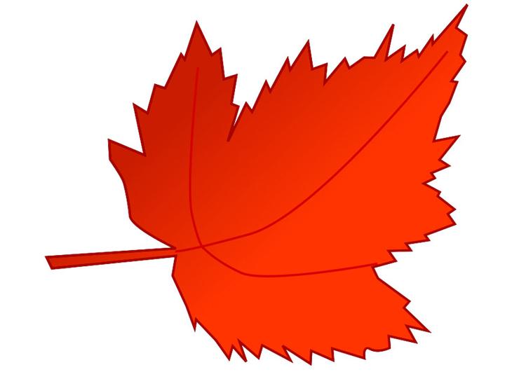 feuille-d-automne-20540.jpg